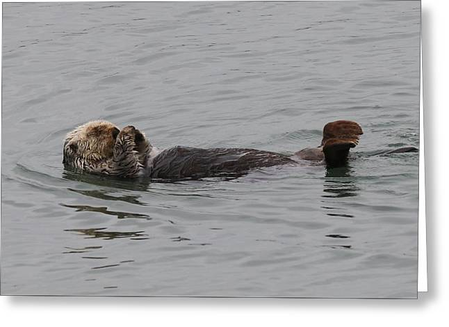 Sea Animals Greeting Cards - Sea Otter - 3  Greeting Card by Christy Pooschke