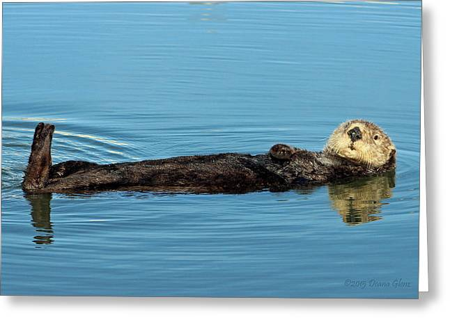 Moss Landing Harbor Greeting Cards - Sea Otter Greeting Card by Deana Glenz