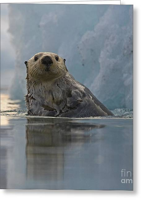 Ocean Mammals Greeting Cards - Sea Otter Double Take Greeting Card by Tim Grams