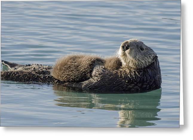 Southcentral Alaska Greeting Cards - Sea Otter  Enhydra Lutris  Female Greeting Card by Thomas Kline