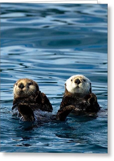 Adam Pender Greeting Cards - Sea Otter Pair Greeting Card by Adam Pender