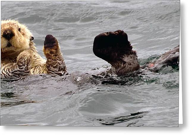 Ocean Mammals Greeting Cards - Sea Otter Salute Greeting Card by Jim Chamberlain