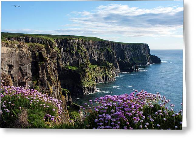 Sea Pink On The Cliffs Greeting Card by Aidan Moran