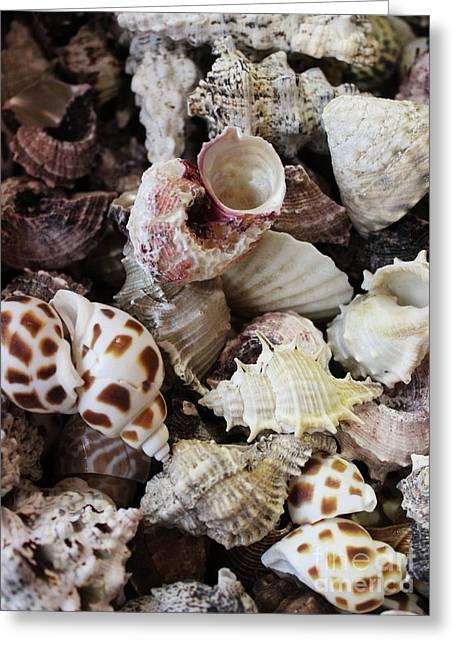 Sea Shell Assortment Greeting Card by Paulette Thomas