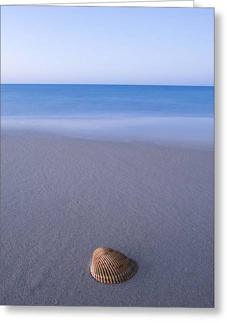 Sea. Morning Greeting Cards - Sea Shell Greeting Card by Noah Bryant