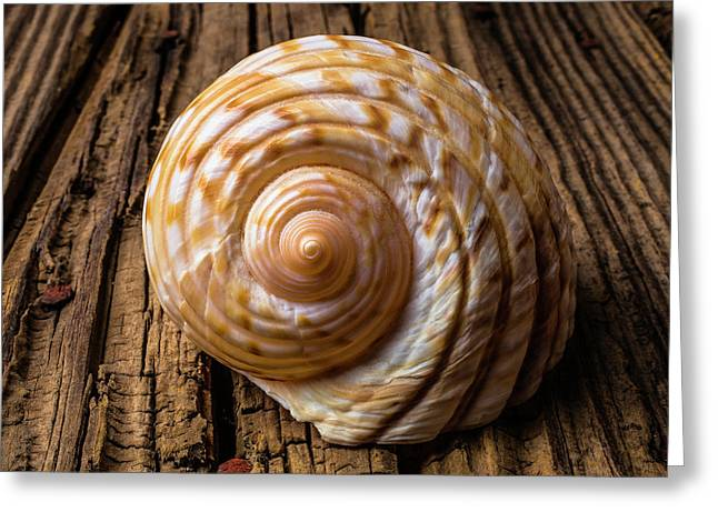 Sea Shell Study In Brown Tones Greeting Card by Garry Gay