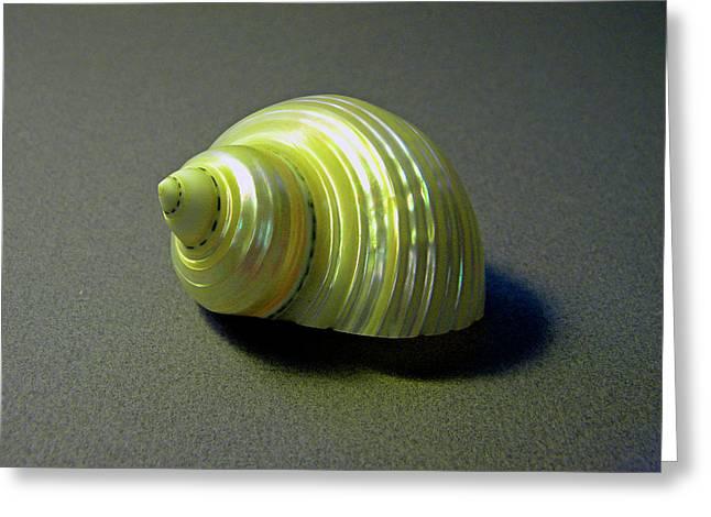 Frank Ocean Greeting Cards - Sea Shell Turbo marmoratus Greeting Card by Frank Wilson