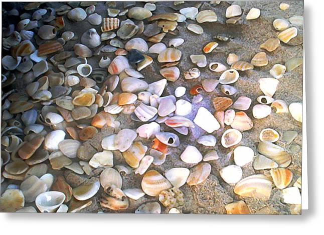 Dry Brush Greeting Cards - Sea Shells Greeting Card by Evelyn Patrick