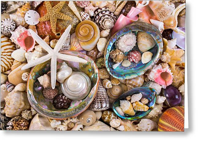 Sea Shells Greeting Card by Jim Hughes