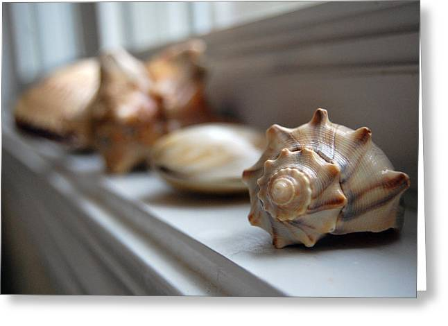 Soft Light Greeting Cards - Sea Shells Greeting Card by Robert Meanor