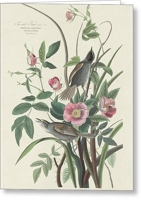 Small Bird Greeting Cards - Sea-Side Finch Greeting Card by John James Audubon