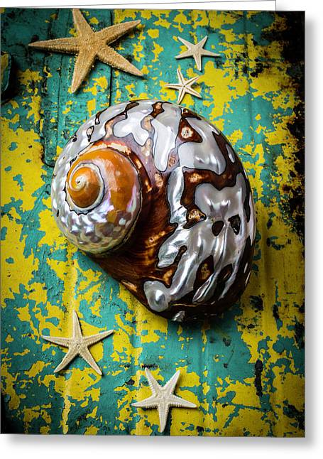 Sea Snail Shell With Stars Greeting Card by Garry Gay