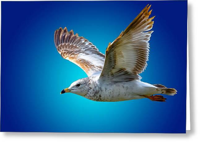 Flying Animal Greeting Cards - Sea Soar 2 Greeting Card by Brian Stevens