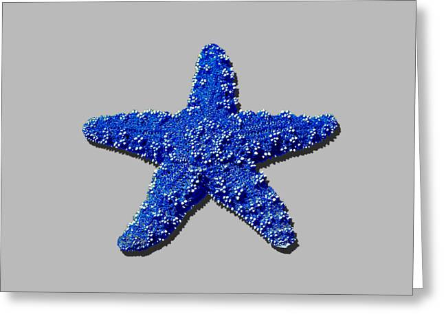Star Fish Greeting Cards - Sea Star Navy Blue .png Greeting Card by Al Powell Photography USA