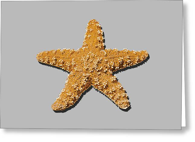 Sea Star Orange .png Greeting Card by Al Powell Photography USA