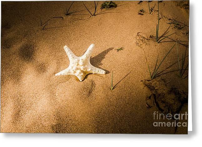 Sea Star Scene Greeting Card by Jorgo Photography - Wall Art Gallery