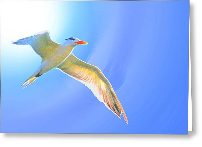 Tern Digital Art Greeting Cards - Sea Tern If I were A Bird Greeting Card by W Gilroy