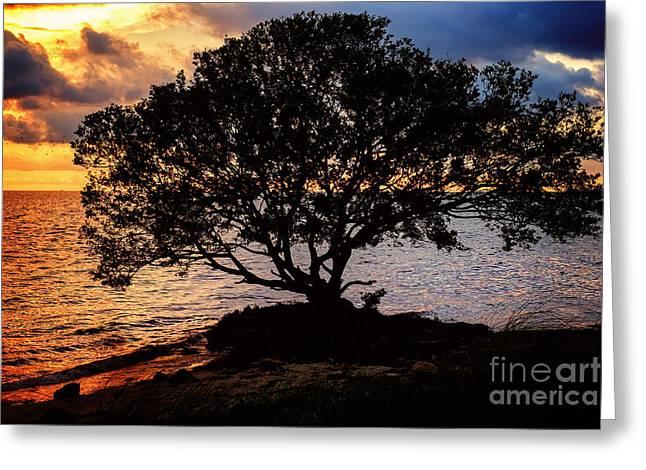 Beach Photos Pyrography Greeting Cards - Sea Tree Greeting Card by Eyzen M Kim
