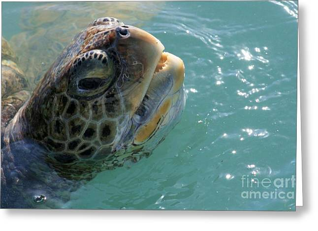 Sea Animals Greeting Cards - Sea Turtle Close Up Greeting Card by Robert Wilder Jr