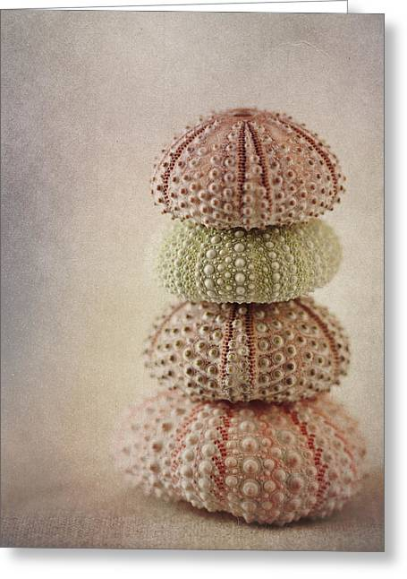 Shell Texture Greeting Cards - Sea Urchins Greeting Card by Carol Leigh