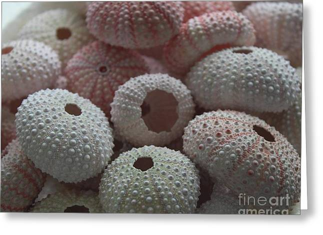 Sea Urchins Greeting Card by Paulette Thomas