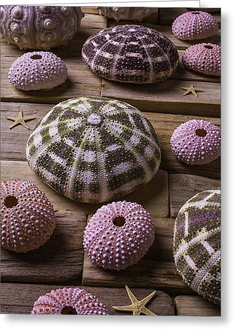 Sea Urchins Greeting Cards - Sea Urchins With Tiny Stars Greeting Card by Garry Gay