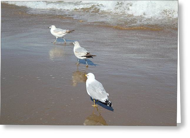 Seabirds Greeting Cards - Seabirds at Sea Greeting Card by E A