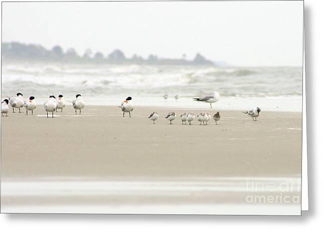Seabirds On Hilton Head Shoreline Greeting Card by Angela Rath