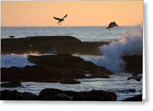 Seaguls Greeting Cards - Seagul Rocks Greeting Card by Brad Scott