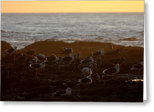 Seaguls Greeting Cards - Seagul Sunset Greeting Card by Brad Scott
