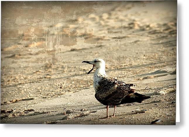 Bay Head Beach Greeting Cards - Seagull 2 - Jersey Shore Greeting Card by Angie Tirado