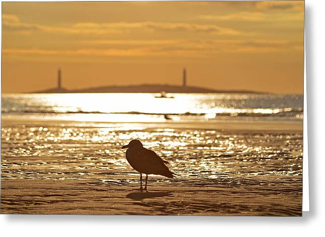 Seagull Admiring Thacher Island Gloucester Ma Good Harbor Beach Greeting Card by Toby McGuire