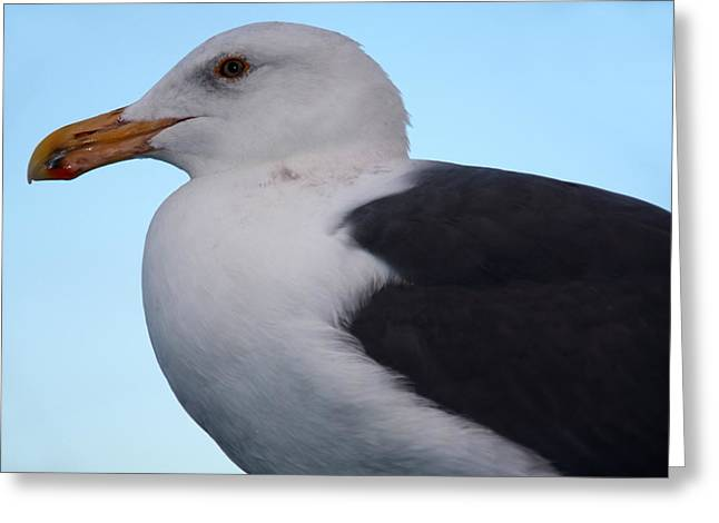 Seagull Greeting Card by Aidan Moran
