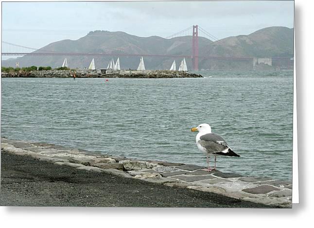 Seagull And Golden Gate Bridge Greeting Card by Masha Batkova