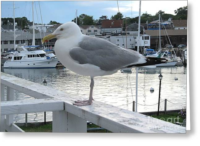 Bay Greeting Cards - Seagull at Rest Greeting Card by Anthony Morretta