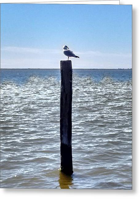 Seagull Greeting Card by Bruce Lennon
