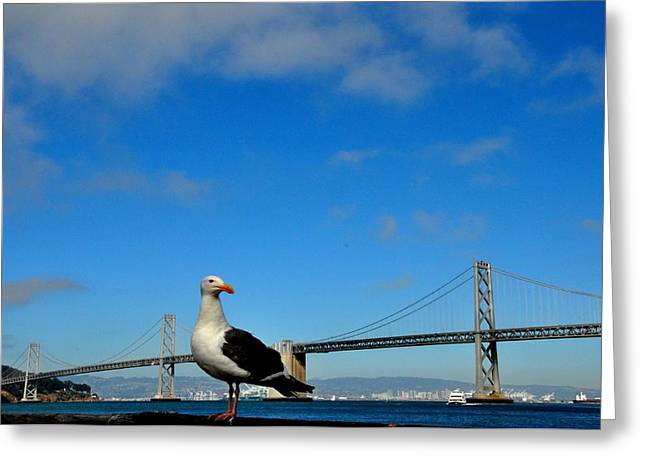 Union Square Greeting Cards - Seagull by the Bay Bridge San Francisco Greeting Card by Andrew Dinh