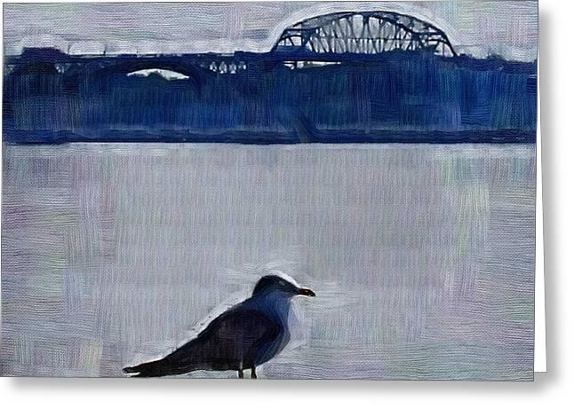 Seagul Greeting Cards - Seagull Greeting Card by Deborah MacQuarrie