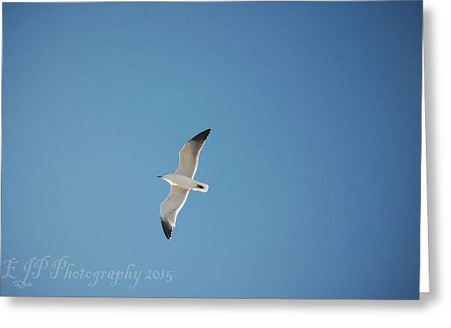 Flying Seagull Greeting Cards - Seagull Greeting Card by EJP  Photography