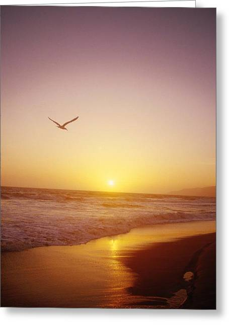 Shorebirds Greeting Cards - Seagull Flying In Yellow Sunset Greeting Card by Ink and Main