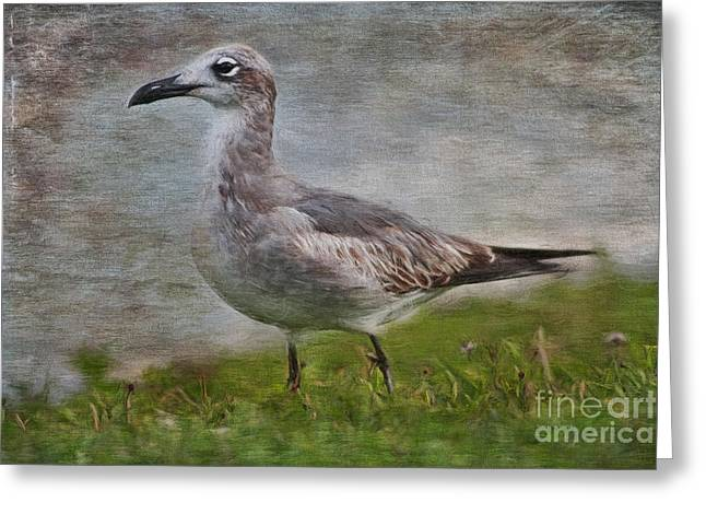 Flying Seagull Greeting Cards - Seagull Friend Greeting Card by Deborah Benoit