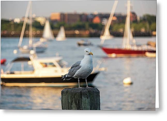 Seagull Guarding The Boston Harbor Boston Ma Greeting Card by Toby McGuire