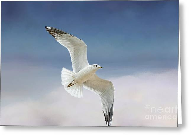 Flying Seagulls Greeting Cards - Seagull in Flight Greeting Card by Bonnie Barry