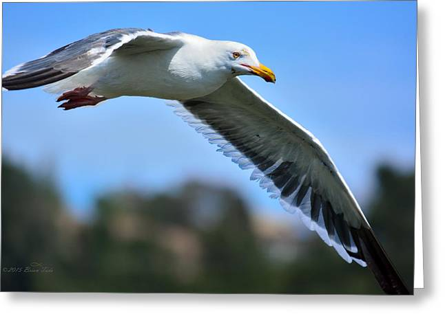 California Ocean Photography Greeting Cards - Seagull In Flight Greeting Card by Brian Tada