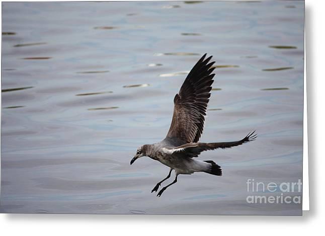 Seagull Landing Greeting Card by Carol Groenen
