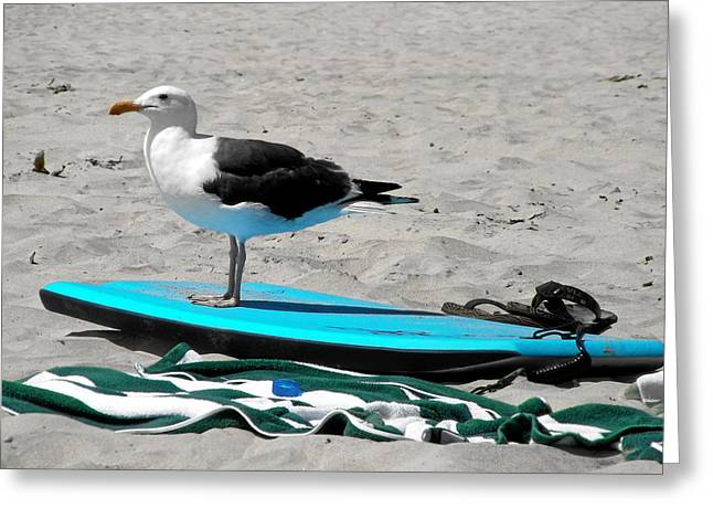 Gulls Greeting Cards - Seagull on a Surfboard Greeting Card by Christine Till