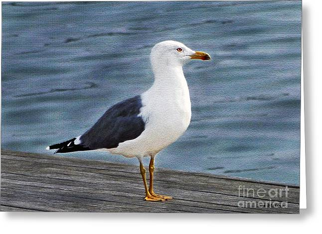 Seagull Portrait Greeting Card by Sue Melvin