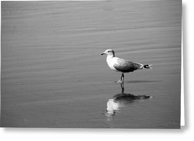 Julie Magers Soulen Greeting Cards - Seagull Reflection Greeting Card by Julie Magers Soulen