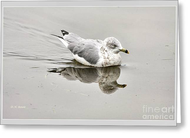 Seagull Reflection Greeting Cards - Seagull Reflections Greeting Card by Deborah Benoit