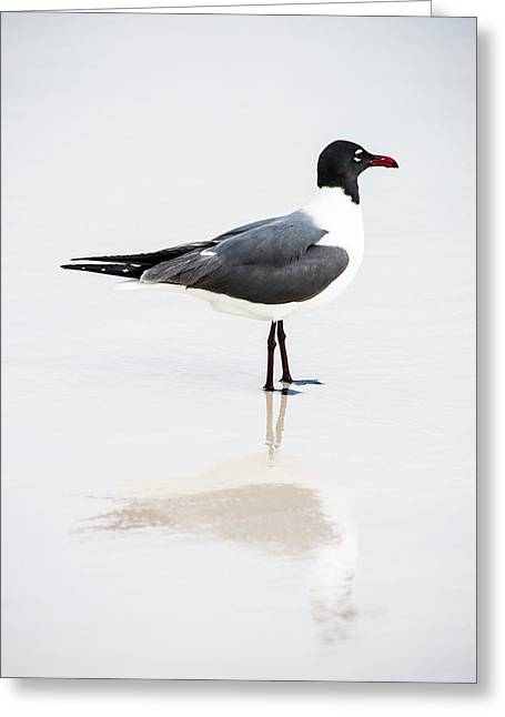 Seagull Reflections Greeting Card by Shelby Young
